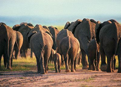 animals, elephants, baby elephant, baby animals - related desktop wallpaper