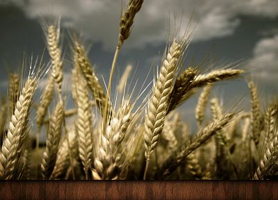 nature, fields, wheat, artwork - related desktop wallpaper