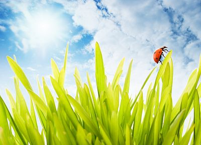 nature, insects, grass, sunlight, ladybirds - random desktop wallpaper