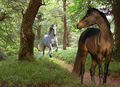 nature, forests, animals, horses - related desktop wallpaper