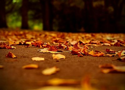 autumn, leaves, depth of field, fallen leaves - related desktop wallpaper