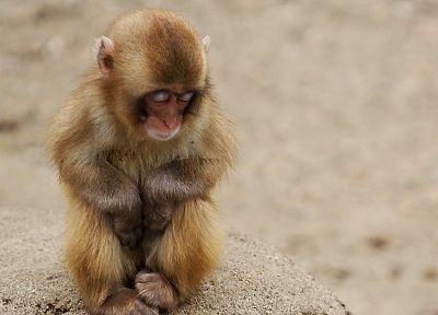 animals, backgrounds, monkeys, baby animals - related desktop wallpaper