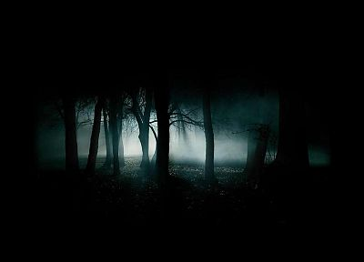 landscapes, dark, forests - random desktop wallpaper