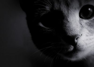 black and white, cats, animals, kittens - related desktop wallpaper