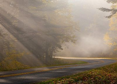 nature, leaves, fog, roads - random desktop wallpaper