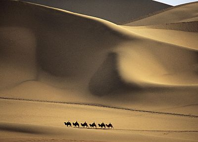 landscapes, deserts, camels - related desktop wallpaper