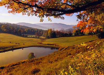 landscapes, nature, trees, autumn, forests, hills, ponds - desktop wallpaper