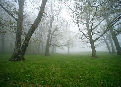 green, nature, trees, grass, fields, fog, mist - related desktop wallpaper