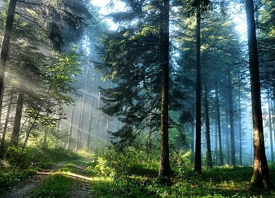 landscapes, nature, trees, forests, sunlight, roads, HDR photography - related desktop wallpaper