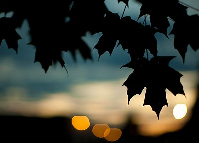 trees, leaves, silhouettes, plants, bokeh, maple leaf - related desktop wallpaper