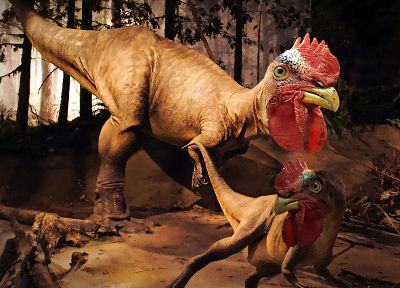 dinosaurs, chickens - random desktop wallpaper