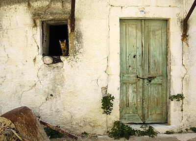 cats, old, houses, window panes, doors - random desktop wallpaper