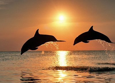 Sun, silhouettes, jumping, dolphins, sea - random desktop wallpaper
