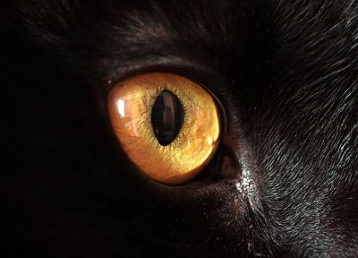close-up, eyes, cats, animals - random desktop wallpaper