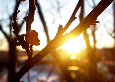 nature, trees, sunlight, macro, morning, branches, sun flare - desktop wallpaper