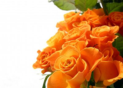 flowers, roses, orange flowers - random desktop wallpaper