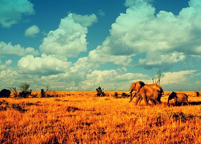 landscapes, animals, elephants, baby elephant, baby animals - related desktop wallpaper