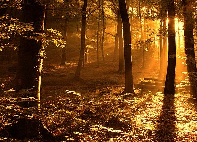 light, nature, Sun, trees, autumn, forests, orange, woods, sunlight - desktop wallpaper