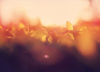 sunrise, Sun, leaves, summer, bokeh, macro, morning, flare - random desktop wallpaper