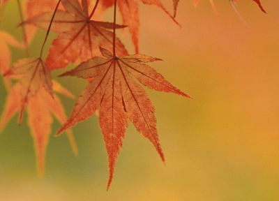 autumn, leaves - random desktop wallpaper