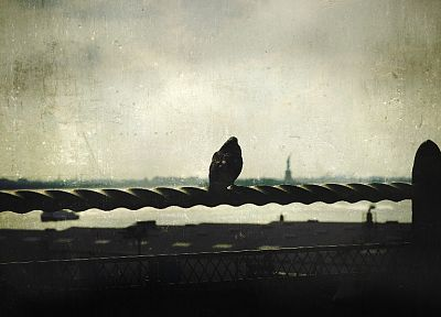birds, grunge, New York City, pigeons, railing - related desktop wallpaper