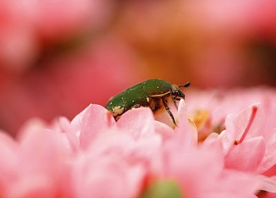 flowers, insects - desktop wallpaper