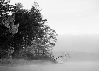 trees, fog, grayscale - desktop wallpaper