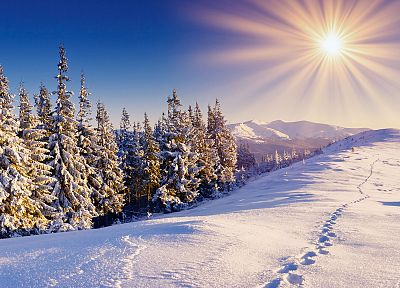 clouds, landscapes, snow, trees, sunlight, sun flare - random desktop wallpaper