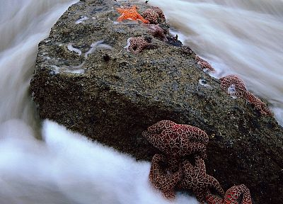 water, nature, rocks, starfish - related desktop wallpaper