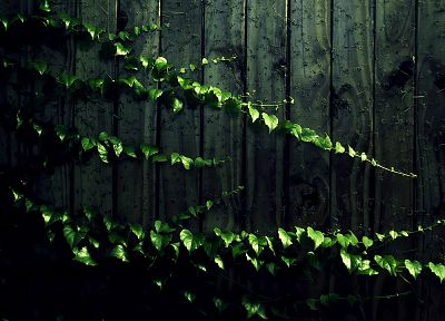wood, leaves, wood panels, vines - desktop wallpaper