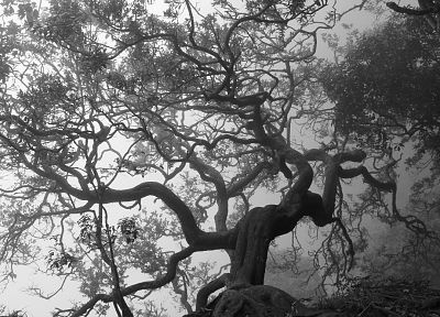 creepy, nature, trees, monochrome, greyscale, gnarled - desktop wallpaper