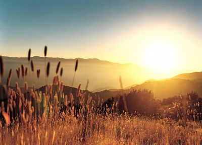 sunrise, landscapes, Sun, hills, wheat, spikelets - desktop wallpaper