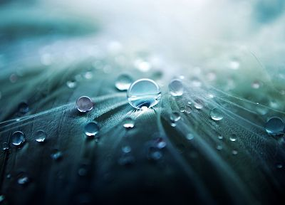 nature, water drops - random desktop wallpaper