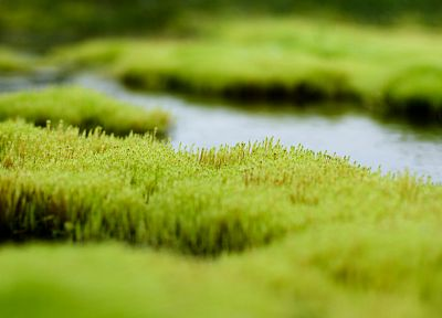 nature, grass, tilt-shift - desktop wallpaper