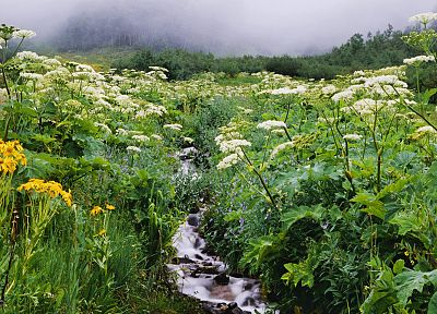 flowers, forests, streams, Colorado, wildflowers - desktop wallpaper