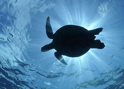 green, silhouettes, sea turtles - related desktop wallpaper