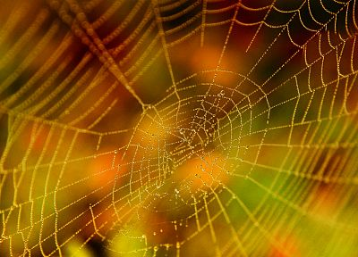 spider webs - desktop wallpaper