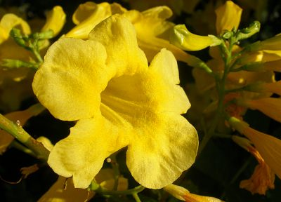 flowers, yellow flowers - related desktop wallpaper