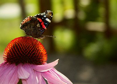 nature, flowers, insects, butterflies - related desktop wallpaper