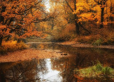 water, landscapes, nature, trees, autumn, forests, rivers - related desktop wallpaper
