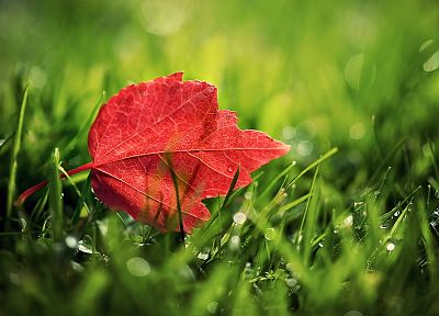 nature, leaves, fallen leaves - random desktop wallpaper
