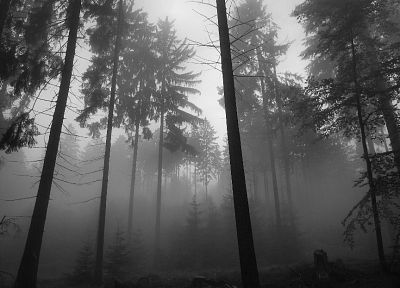 dark, forests, grayscale, monochrome - random desktop wallpaper