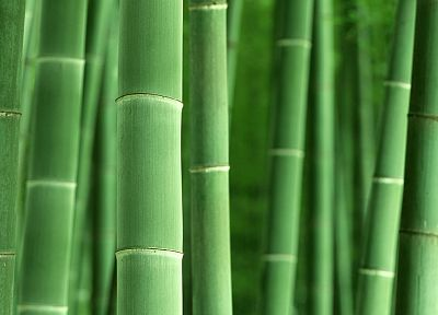 bamboo, plants - random desktop wallpaper