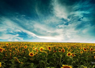 clouds, landscapes, nature, flowers - desktop wallpaper