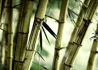 nature, bamboo, plants - random desktop wallpaper
