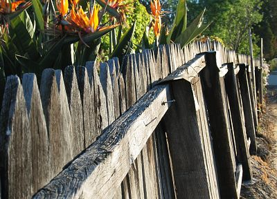 nature, flowers, fences, outdoors, plants, picket fence - desktop wallpaper