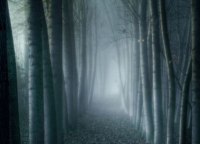 trees, forests, fog, mist, eerie - random desktop wallpaper