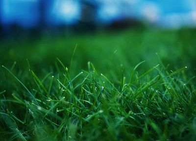 green, nature, grass - random desktop wallpaper