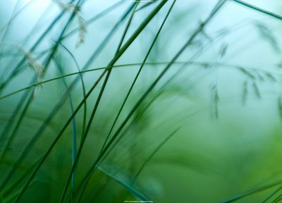 nature, grass, macro, depth of field - related desktop wallpaper