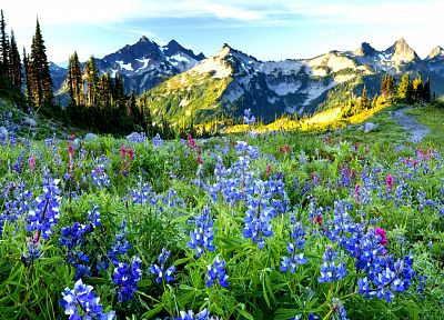 mountains, landscapes, nature, blue flowers, wildflowers - related desktop wallpaper